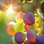 Cum alegem vinurile de import
