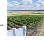 Interesul consumatorilor pentru vinul românesc, de calitate, a crescut în ultimii ani. Vedeta acestei ierni: vinul rose